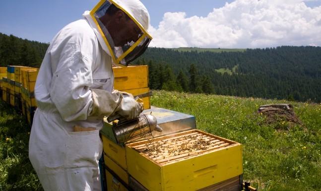 Mieli di alta montagna Slow Food