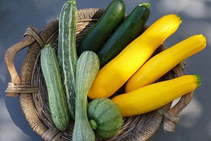 Varietà di zucchine