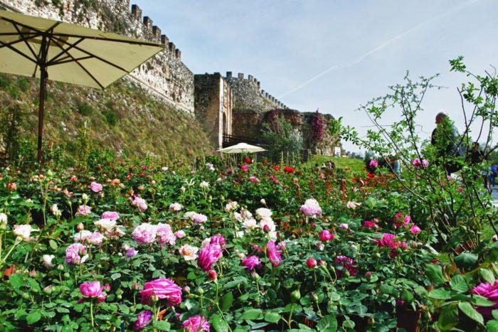 Fiori nella Rocca - Lonato del Garda